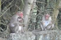 Kumily: Hey Hey we're the Monkeys!