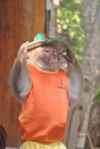 Señor Monkey!