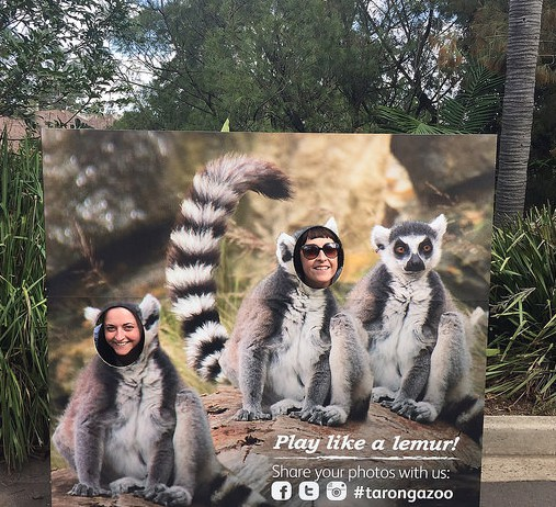 Wait a minute... those aren't Lemurs!!