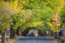 Hahndorf Autumn