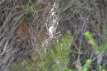 What a spider!!