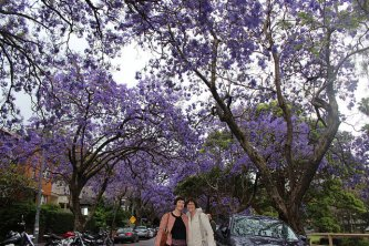 Another Pose with the Jacaranda Trees